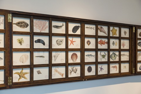 Mark Dion, Resilient Marine Life of Istanbul, 2017 (Burak Dak, Işık Güner, Reysi Kamhi, Dana Sherwood, Jana Weaver, Bryan M. Wilson)  Wooden cabinet, watercolour drawings. Cabinet 425.5 x 75.8 cm, 64 paintings, each 15.2 x 22.9 cm Courtesy of the artist a