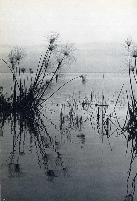 """بيتر ميروم، من """"أناشيد البحيرة المحتضرة""""، منشورات دفار، تل أبيب، 1960"""