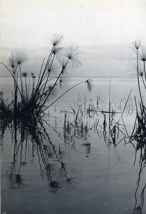 Peter Merom, from Song of a Dying Lake, Davar Ltd, Tel Aviv, 1960
