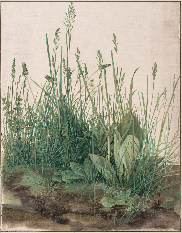 אלברכט דירר, כברת האחו הגדולה, 1503