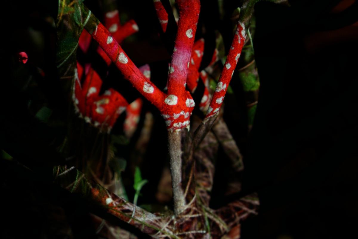 Yoav Ruda, Mushroom Tree Hybrid, 2020, projection photography